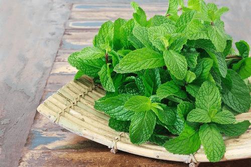 Mięta pieprzowa – naturalne środki lecznicze