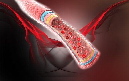 Naczynie krwionośne w przekroju