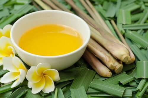 Olejek z citronelli – niezastąpiony na komary, wszy i pchły!