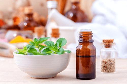 Oregano - roślina i olejek