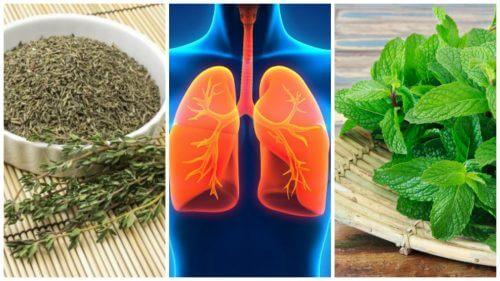Płuca – zadbaj o nie dzięki tym 8 ziołom