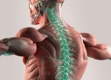 Kręgosłup - mikrowłókna