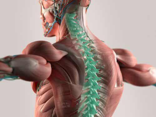 Mikrowłókna, które odbudowują rdzeń kręgowy