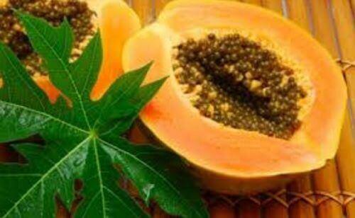 Liście papai - 13 niezwykłych korzyści