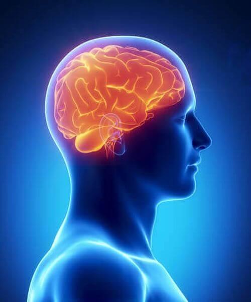 Mózg zdrowy i sprawny dzięki tym 8 produktom!
