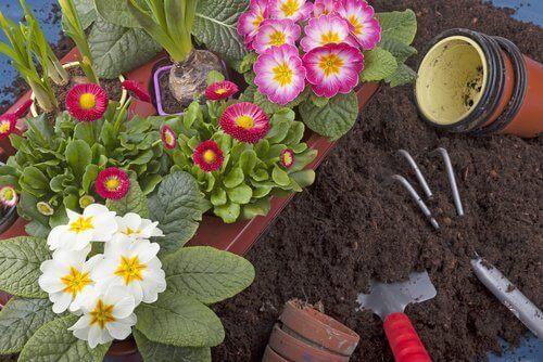 Uprawianie roślin