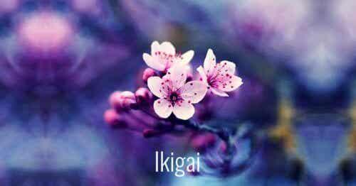Japońskie słowa, które ułatwią rozwój osobisty