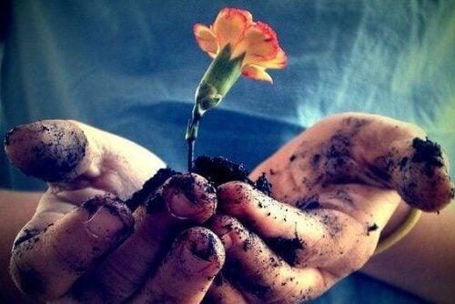 Kwiat w dłoniach
