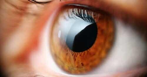 Oczy - Poznaj 5 problemów zdrowotnych