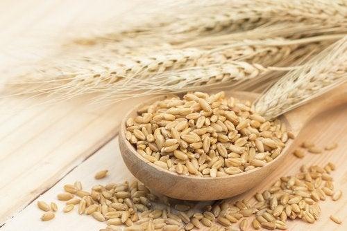 Ziarna zbóż