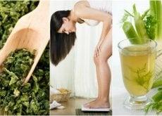 Jak szybko schudnąć przy wykorzystaniu 5 roślin leczniczych