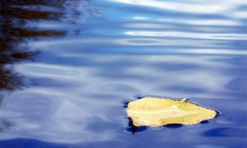 liść na wodzie