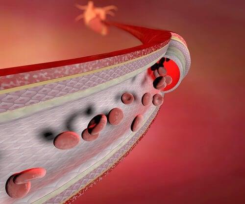 Naczynie krwionośne - animacja