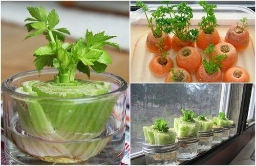 Odrastające warzywa – 5 przykładów