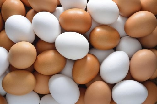 Bogate w witaminę B12 jajka