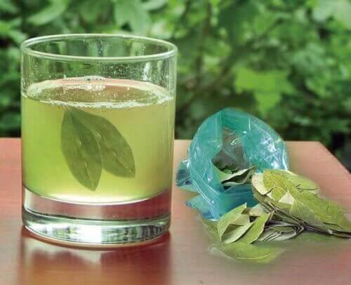 Napar z liści na kamienie nerkowe