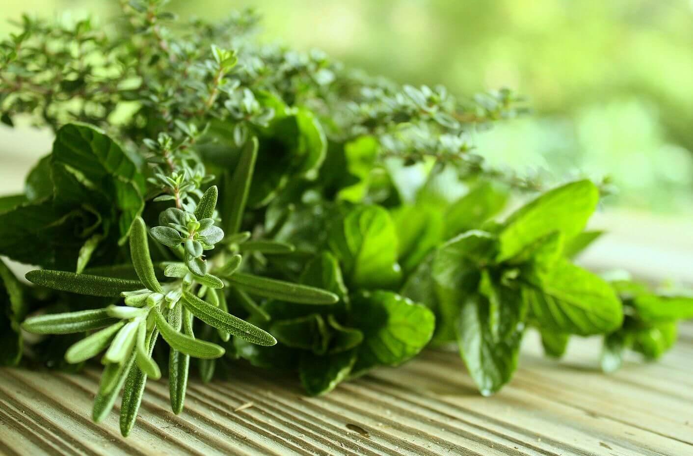 Świeże ziołaa nasz oddech