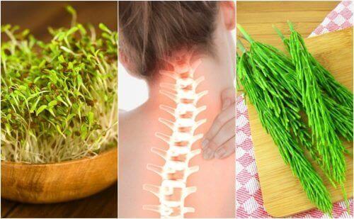 Zdrowe kości – 7 składników wzmacniających układ szkieletowy