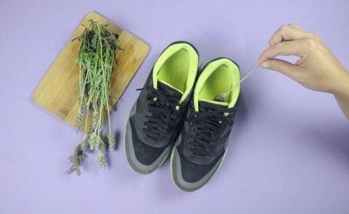 Lawenda do butów