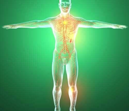 Schemat układu limfatycznego