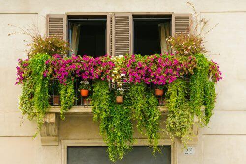 Ogród na balkonie a miniogród
