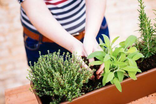 Rośliny w doniczce a miniogród