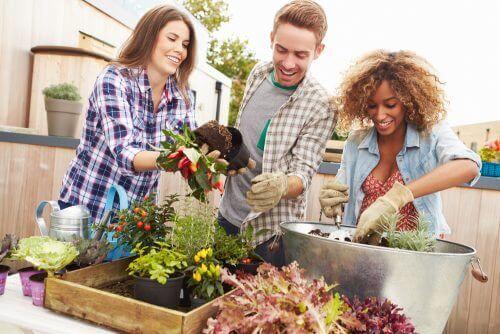 Uprawa roślin a miniogród