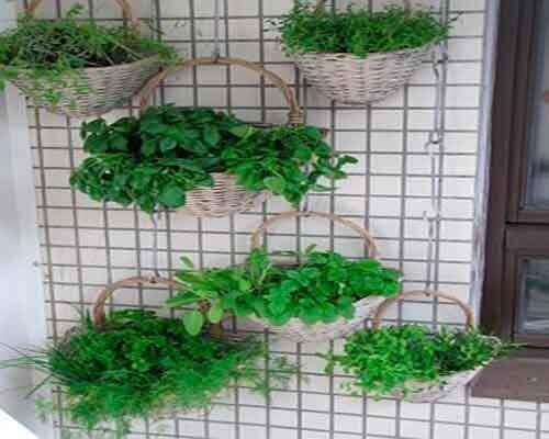 wiszące rośliny