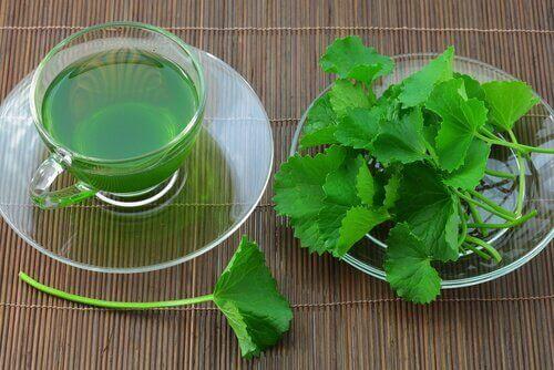 Herbata z selera na zatkane tętnice