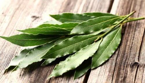 Liście eukaliptusa na alergie