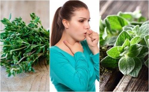 Mokry kaszel – 5 roślin, które przyniosą ulgę