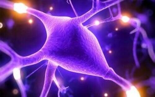 Magnez – dowiedz się dlaczego jest niezbędny dla Twojego mózgu