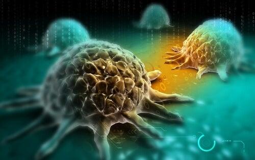 Komórki nowotworowe a brokuły w diecie