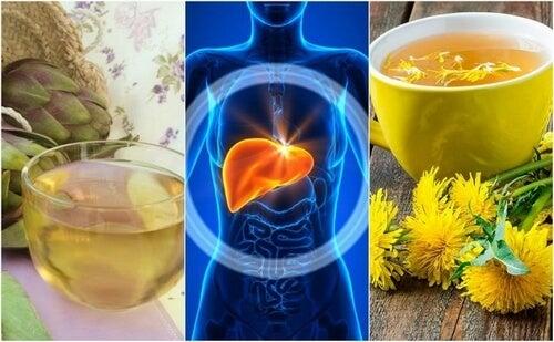 Stłuszczenie wątroby – zwalcz je naturalnie ziołowymi remediami