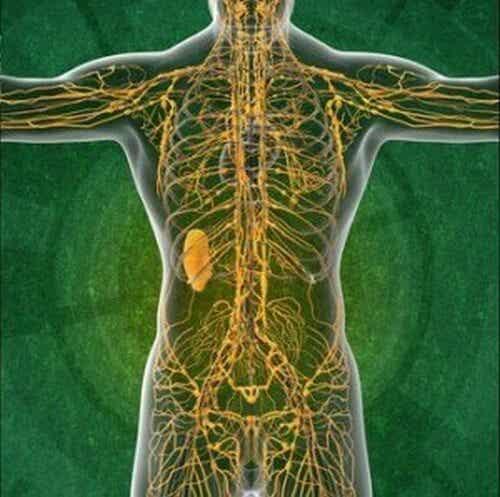 Układ limfatyczny - Usprawnij go na 5 sposobów
