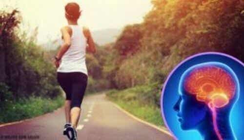 Mózg a ćwiczenia - Jak reaguje na brak aktywności?