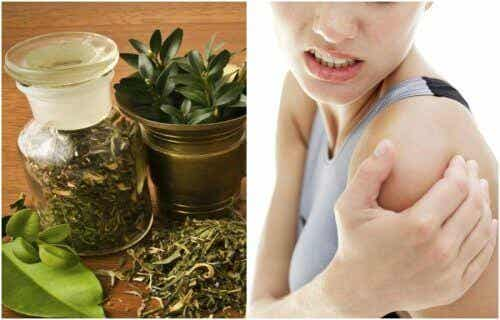 Maść z nalewki ziołowej na ulgę bolącym stawom