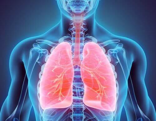 Jak rzucić palenie i oczyścić płuca – Dowiedz się