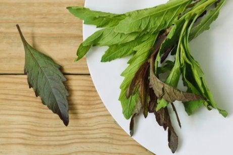 Suszone liście a herbaty ziołowe