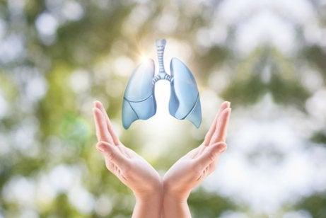 Zdrowe płuca w dłoni, a Nowotwór płuca