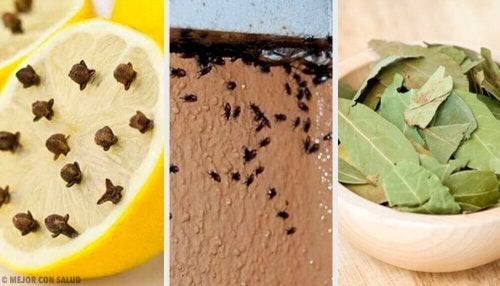 Natrętne insekty w domu? – Pozbądź się ich naturalnie!
