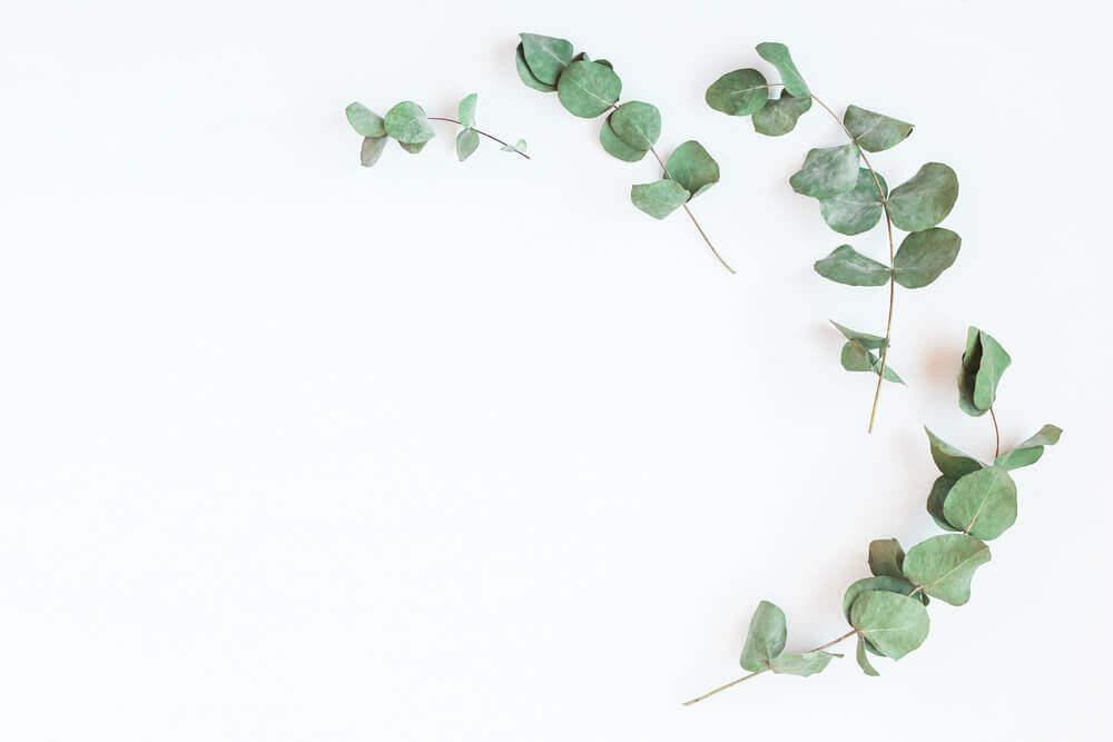 Liście eukaliptusa na zdrowe Płuca