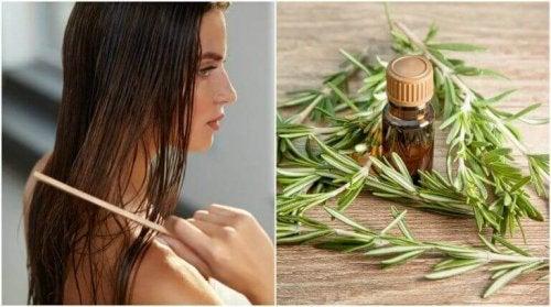Rozmaryn i jego 5 właściwości korzystnych dla włosów