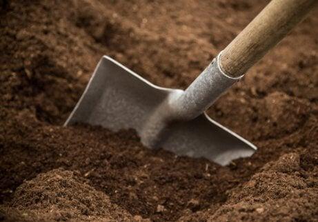 Sucha gleba na zioła