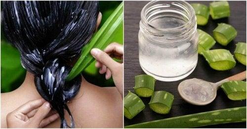 Aloes i jego dobroczynne działanie na zdrowie włosów