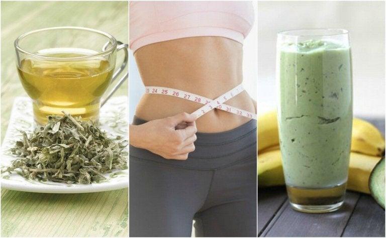 Zielona herbata na odchudzanie? – 3 skutecznie napoje