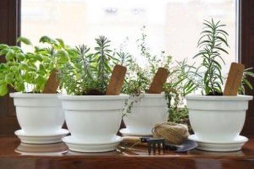 Zioła w Twoim domu - stwórz mały aromatyczny ogród