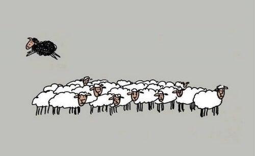 Czarna owca – cztery powody, dla których warto nią być