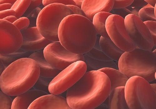 Czerwone krwinki – naturalne sposoby, by zwiększyć ich ilość