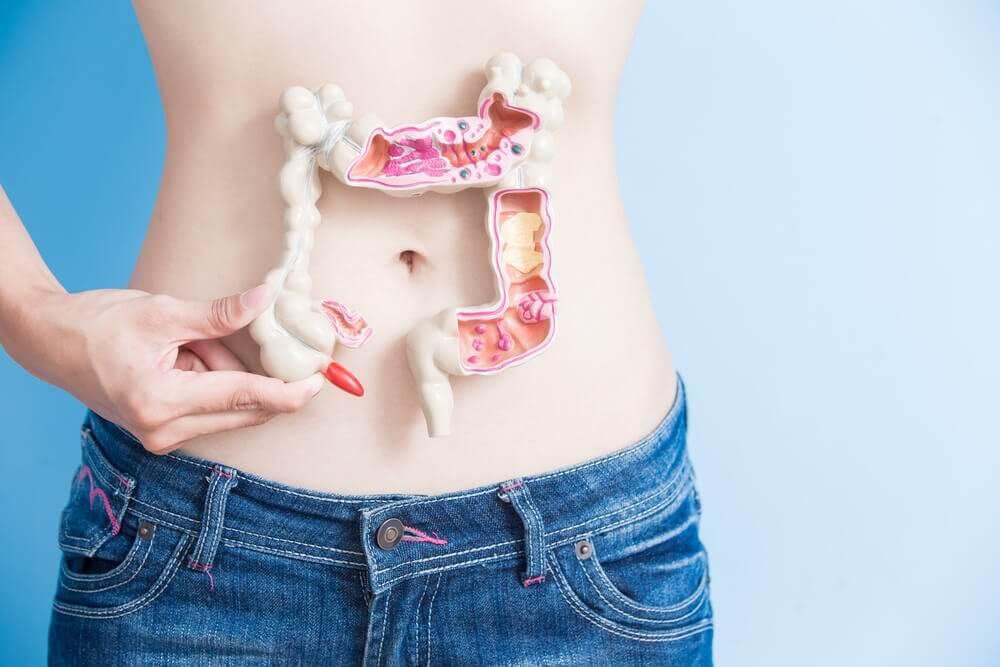 Jelita kobieta trzyma sztuczne jelito